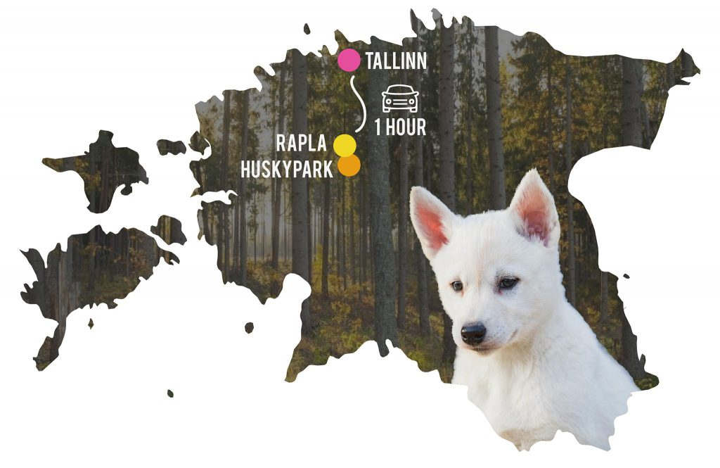 Estonian countryside half-day trip from Tallinn to Huskypark and Rapla