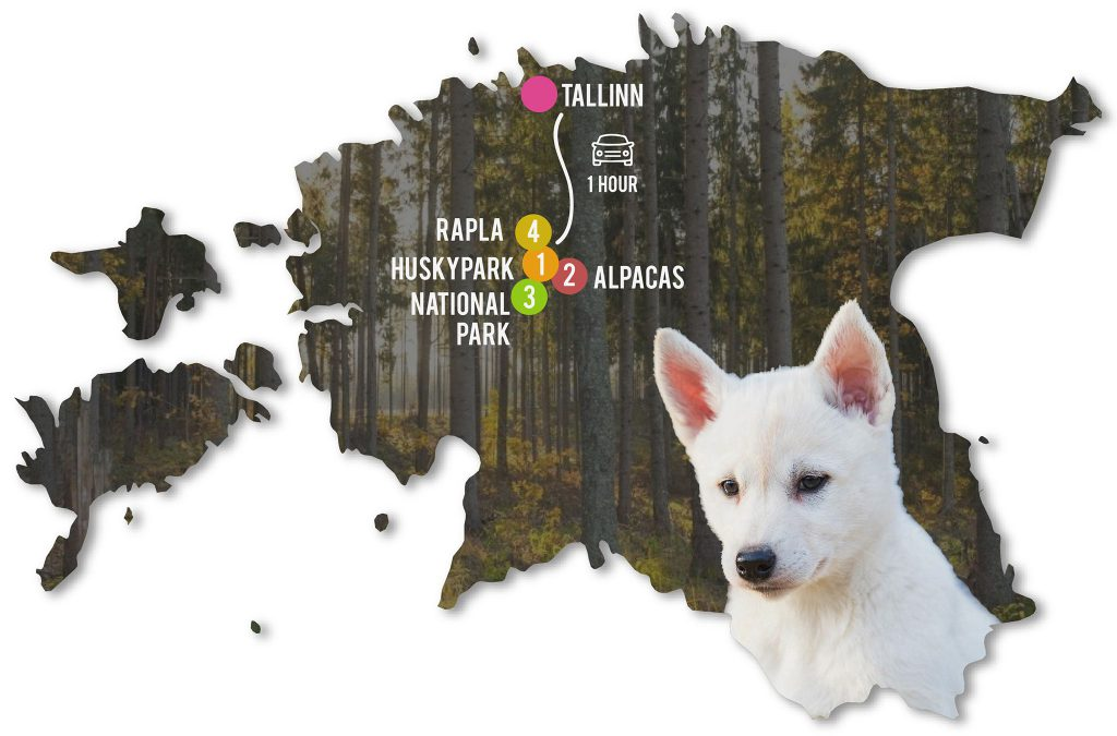 Estonian Countryside Day Trip 2020